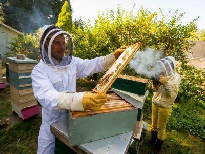 inca-o-luna-pentru-depunerea-cererilor-de-finantare-prin-programul-national-apicol