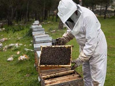 mai-multi-bani-pentru-apicultori-prin-programul-national-apicol