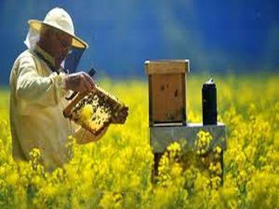 apia-cererile-de-finantare-in-cadrul-programului-national-apicol-depsasesc-cu-41-la-suta-plafonul-admis