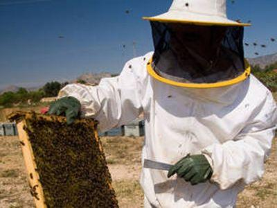 ajutorul-de-minimis-pentru-apicultori-sub-semnul-intrebarii