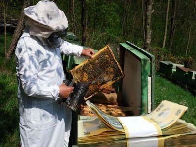 apicultorii-asteptati-la-apia-pentru-a-si-depune-cererile-pentru-subventii