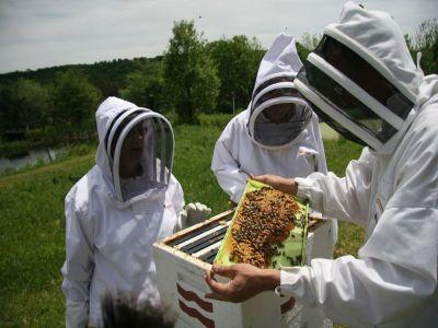 program-de-sprijin-financiar-pentru-apicultori-lansat-in-dezbatere-publica