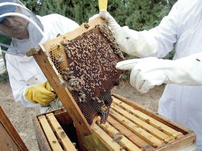 apicultorii-vor-sa-ceara-de-la-madr-ajutor-de-minimis-pentru-anul-acesta