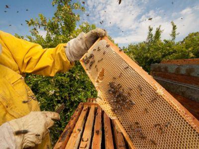 romapis-organizeaza-un-protest-pentru-interzicerea-autorizarii-unor-pesticide-de-mare-risc-pentru-albine