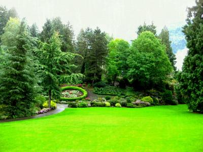 arbori-si-arbusti-ornamentali-cum-si-cand-ii-plantam