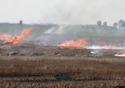 masuri-luate-de-minister-pentru-limitarea-incendiilor-de-miriste-si-vegetatie-uscata