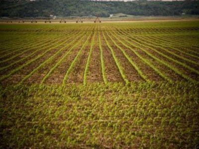 preturile-medii-ale-produselor-agricole-pe-baza-carora-se-calculeaza-impozitul-pe-arenda