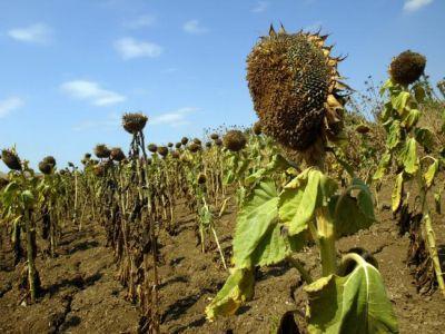 fermierii-afectati-de-arsita-de-peste-vara-ar-putea-fi-despagubiti-ce-trebuie-sa-faca-in-acest-sens-
