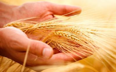 lapar-vrea-sa-infiinteze-un-fond-mutual-pentru-agricultori