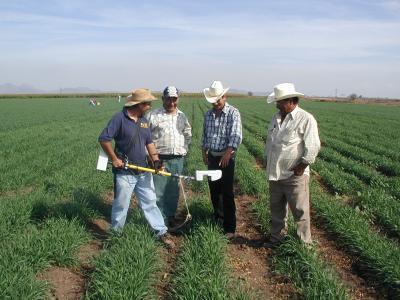 copa-cogeca-organizarea-in-cooperative-agricole-ar-consolida-pozitia-agricultorilor-la-nivelul-lantului-alimentar