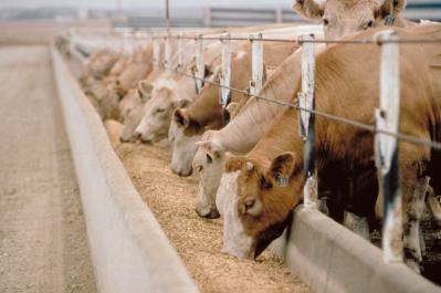 cresterea-cererii-mondiale-de-alimente-anunta-noi-oportunitati-pentru-producatorii-de-lapte