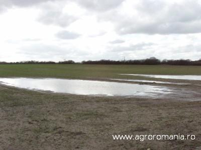 ploaia-a-produs-pagube-pe-400-de-hectare-la-braila