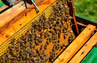 programul-national-apicol-asigura-502-milioane-lei-in-finantari