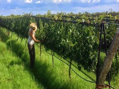schimbari-necesare-pentru-trecerea-la-o-agricultura-suta-la-suta-bio