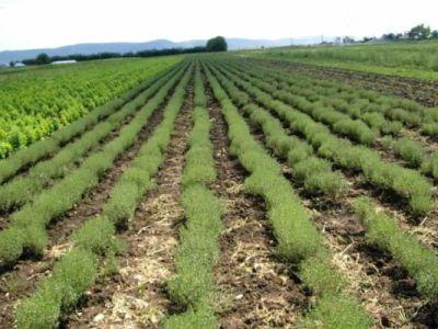 ce-schimbari-majore-sunt-necesare-pentru-a-trece-la-o-agricultura-100-bio