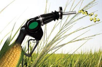 productia-de-biocarburanti-pune-presiune-pe-terenurile-agricole