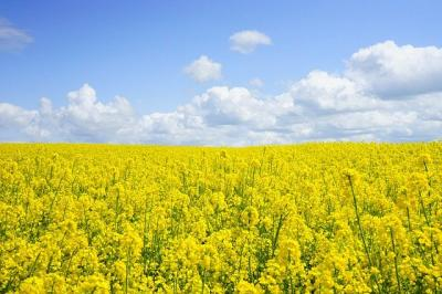ddd-mesaj-pentru-fermieri-bioeconomia-e-viitorul-prosperitatii