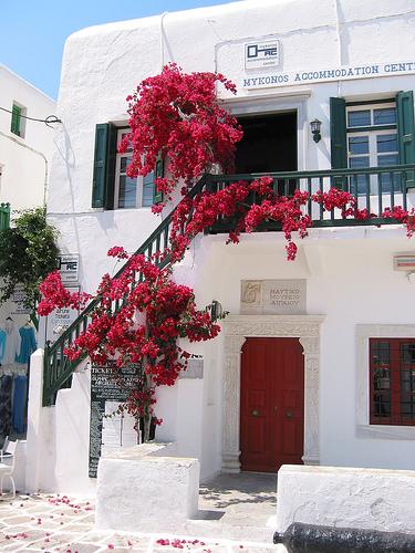 o-liana-colorata-ce-va-oferi-un-aspect-mediteranean-gradinii-tale-bougainvillea-floarea-de-hartie