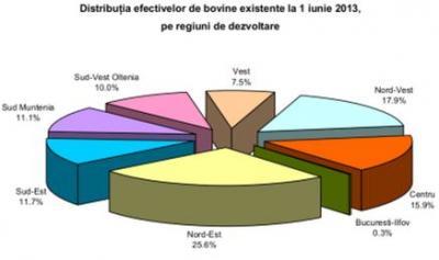 statistici-2013-numarul-de-bovine-in-scadere-fata-de-anul-trecut