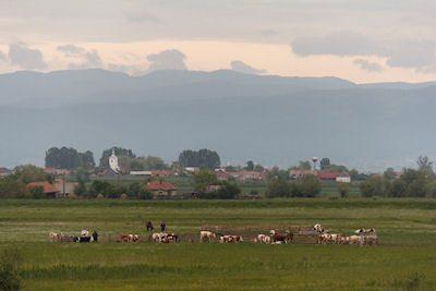 mai-multe-fonduri-de-la-judet-pentru-crescatorii-de-bovine-din-zona-targu-secuiesc