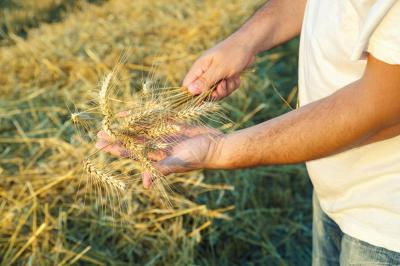 erbicidele-cele-mai-eficiente-impotriva-buruienilor-din-culturile-agricole