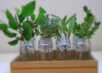 inmultirea-plantelor-prin-butasi