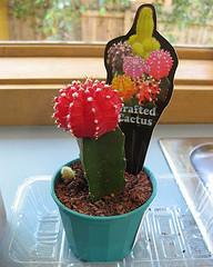 altoirea-cactusilor