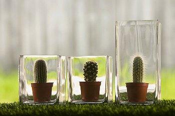 colectia-mea-de-cactusi