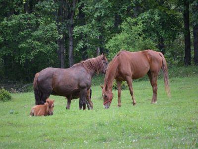 doua-abatoare-de-cai-inchise-in-urma-controalelor-politiei-si-inspectorilor-sanitar-veterinari