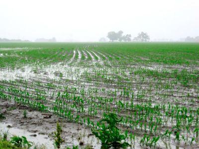 fermierii-din-mehedinti-nu-vor-sa-plateasca-impozit-pentru-culturile-calamitate
