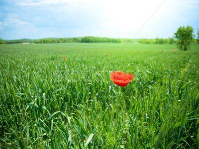 buletin-agrometeorologic-pentru-perioada-7-13-iunie