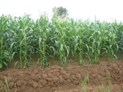 liber-la-vizarea-carnetelor-de-rentier-agricol
