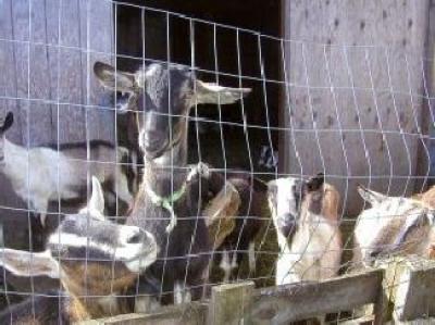 exporturile-de-animale-si-pasari-vii-au-crescut-cu-32procente-in-primele-patru-luni-ale-anului