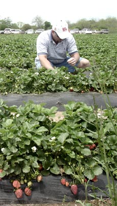 romania-exporta-3000-de-tone-de-fructe-si-legume-ecologice-de-pe-o-suprafata-aflata-in-crestere