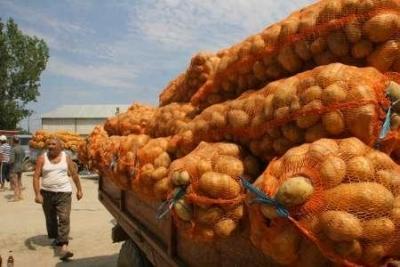 din-pricina-secetei-anul-acesta-vom-avea-putini-cartofi-romanesti