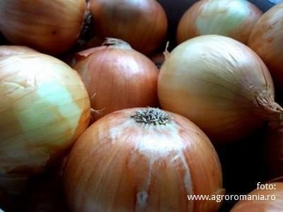 intr-un-an-afectat-de-seceta-un-fermier-din-botosani-raporteaza-40-de-tone-de-ceapa-la-hectar