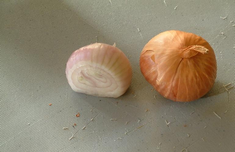 moldovenii-o-numesc-hajma-sarbii-agima-oltenii-ii-spun-vlasita-ceapa-esalota-allium-ascalonicum