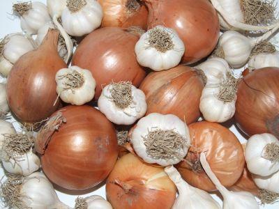 Cultivarea cepei si usturoiului de toamna
