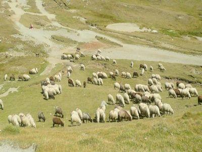 programul-pentru-infiintarea-unor-centre-de-colectare-a-laptelui-in-zona-montana-aprobat-in-senat