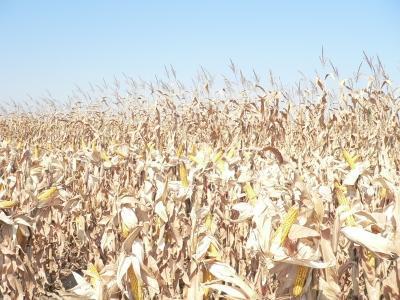 lapar-cere-subventionarea-motorinei-pentru-agricultori