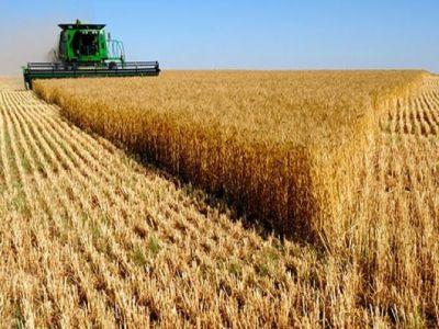romania-ocupa-locul-sase-in-topul-producatorilor-de-cereale-din-uniunea-europeana