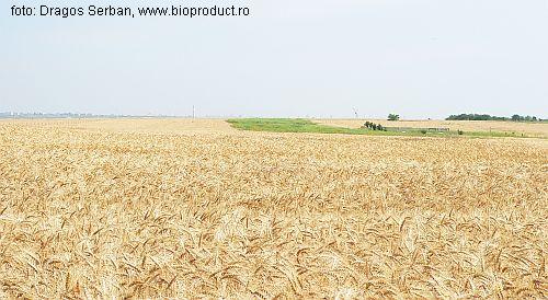 bilantul-subventiilor-pe-suprafata-in-anul-2010-131-euroha-pentru-12-milioane-de-fermieri