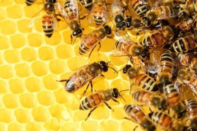 cererile-de-intentie-pentru-accesarea-programului-national-apicol-la-apia
