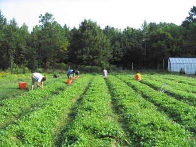 asociatiile-de-fermieri-eco-vor-putea-primi-certificat-de-grup-de-producatori