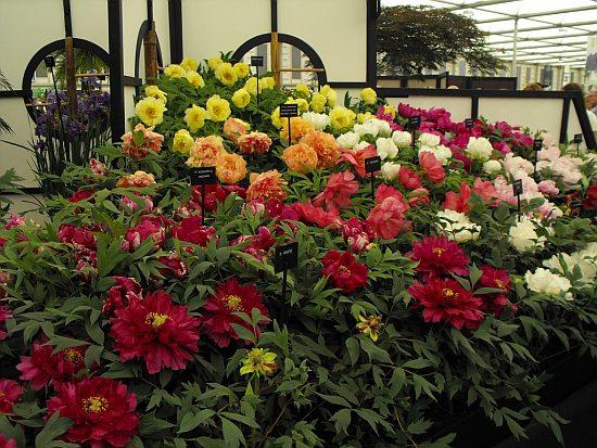 Peisagiştii din toată lumea se pregătesc pentru Chelsea Flower Show, cea mai cunoscută expoziţie florală
