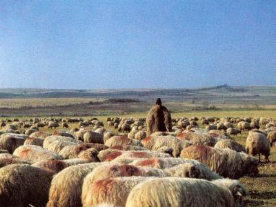 ciobanii-au-luat-cu-asalt-sediul-ministerului-agriculturii