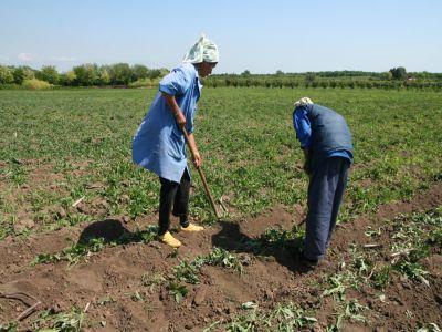 conditii-pentru-accesarea-fondurilor-europene-destinate-investitiilor-in-exploatatii-agricole