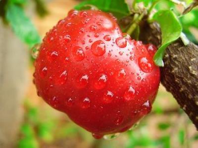 controale-la-achizitiile-intracomunitare-de-legume-fructe-si-produse-congelate