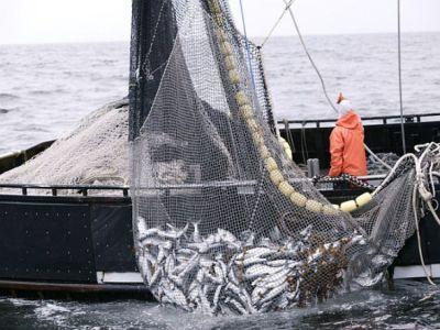romania-isi-pastreaza-cota-de-pescuit-la-calcan-si-in-2014