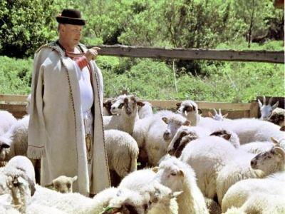 a-crescut-valoarea-ajutorului-de-stat-acordat-crescatorilor-de-animale